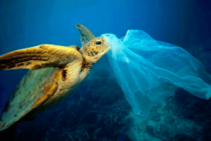Turtle and a plastic bag