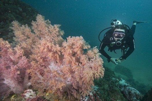 Scuba Diving in Buzios, Brazil