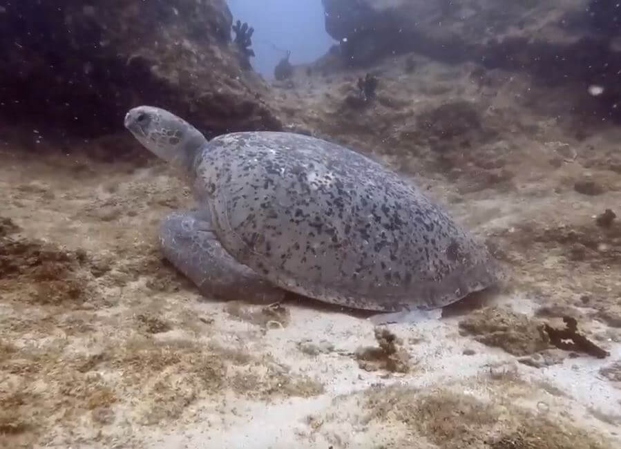 VLOG: Scuba diving in Vilanculous – Mozambique
