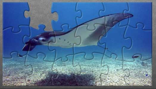 Komodo – Manta Ray Puzzle