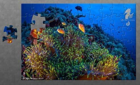MV Oceania Puzzle – Anemone Fish