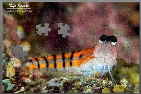 Tufi Resort – Blenny Puzzle