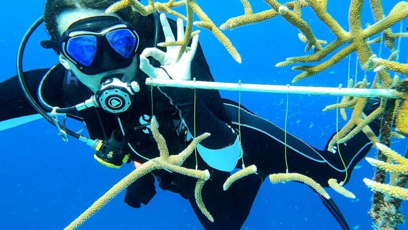Coral restoration – Taking the Reef Renewal course in Bonaire